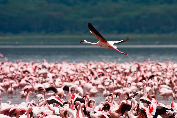 IMAGE: http://www.frankhollis.com/galleries/Kenya_2007/photos/Kenya_20070916_0227.jpg